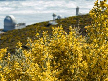 Cuando los mantos dorados cubren los paisajes de España