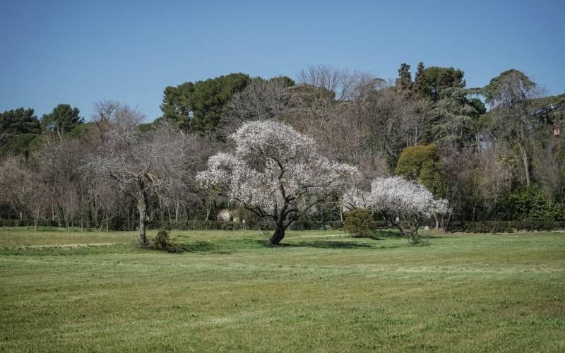 Antiguos campos de cultivo de la finca
