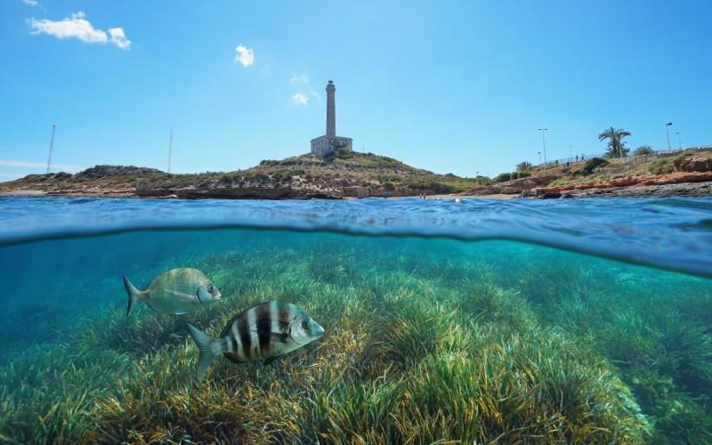 Dos peces bajo el mar en Cabo de Palos