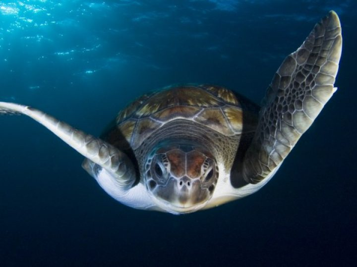 11 ventanas a las profundidades marinas de España