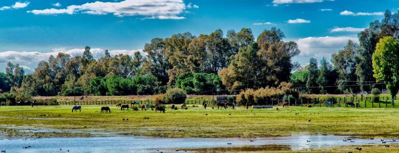 Ciudades perdidas de España Doñana y Taartessos