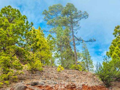 Cumbre Vieja – La Palma