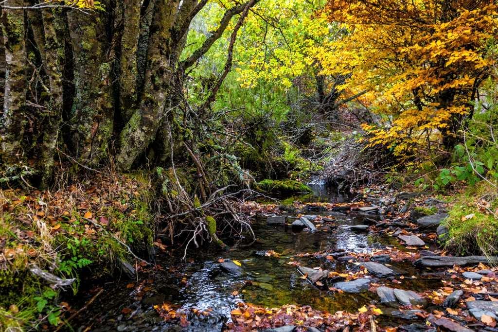 Hayedos españoles para ir en otoño Tejera Negra