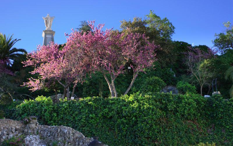 eñón del Sagrado Corazón y Plaza Andalucía de olvera