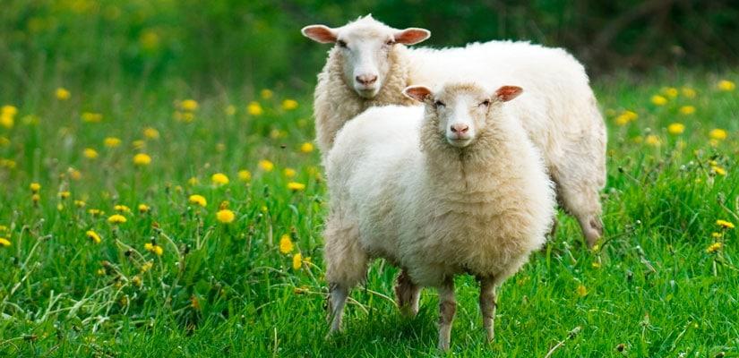 moda lana tejedoras fascinantes