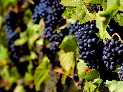 Rioja Alavesa / Fiesta de la Vendimia