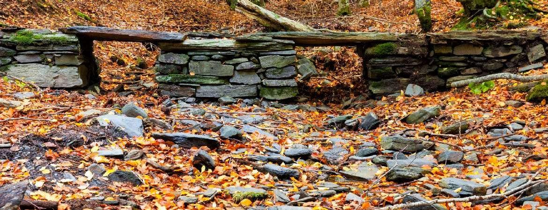 13 hayedos de España en otoño