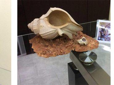 Piedra y Cantería en Cataluña