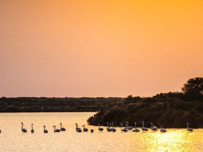 Parque de Ses Salines – Ibiza y Formentera