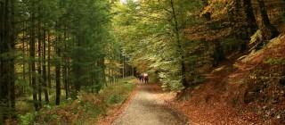 Principal_blog_viajes_-Selva-de-Irati