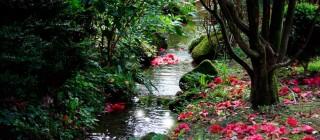 Principal_blog_viajes_Jardines-de-camelias-el-plan-romántico-de-España-fascinante