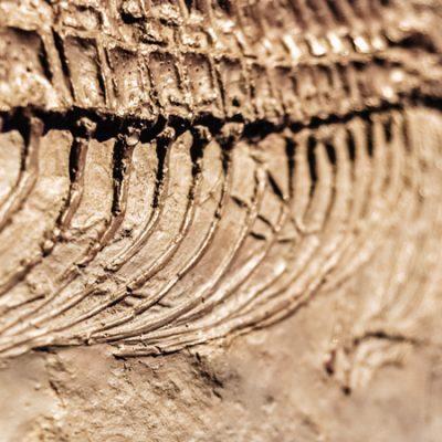 La huella de los dinosaurios en España, 13 lugares en los que encontrarte con ellos
