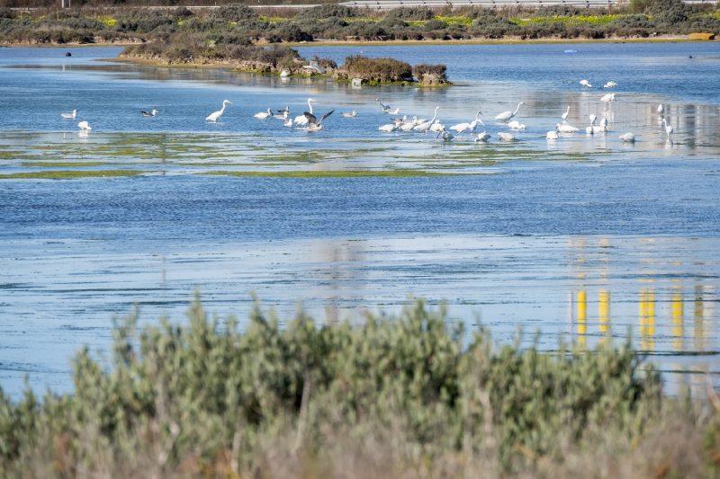 Aves en el entorno puertorrealeño de la Bahía de Cádiz