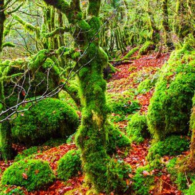 Forêt d´Irati