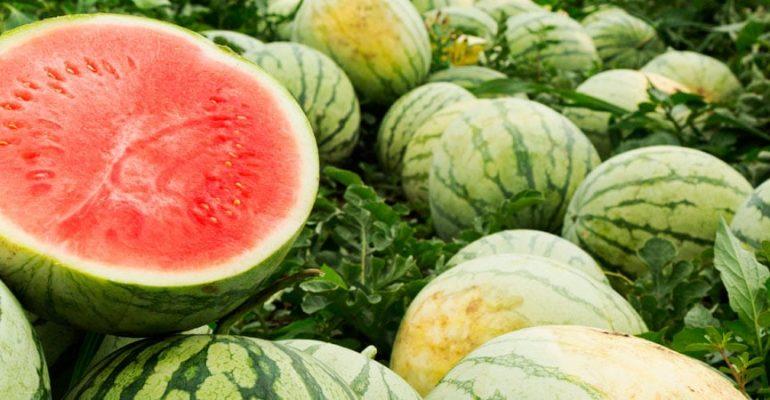 Alimentos de temporada de agosto
