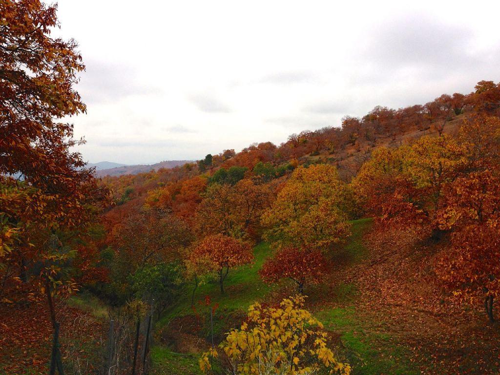 Valles de España para una escapada en otoño Genal