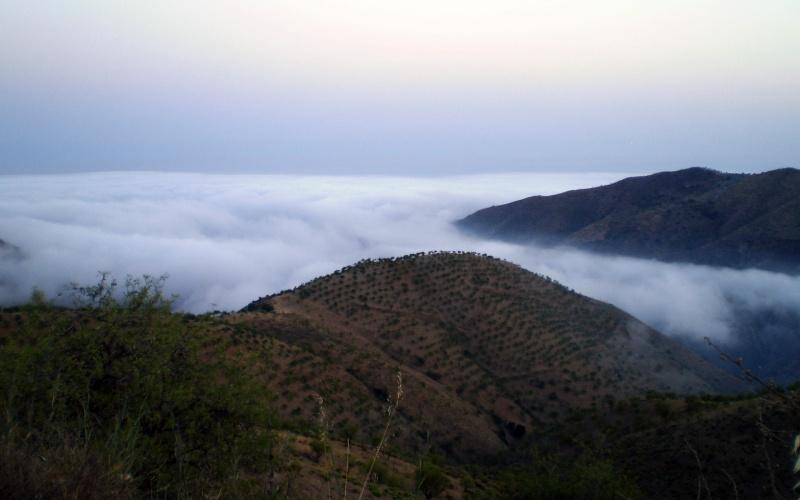 Vista de los viñedos de Sorvilán