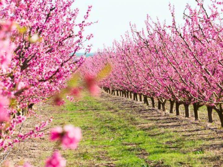 7 lugares para disfrutar de la floración en España