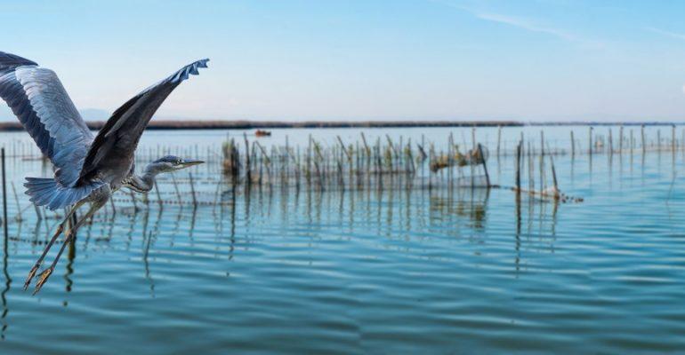 La Albufera fascinante, el gran humedal valenciano que inventó la paella