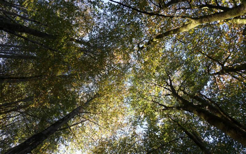 Copas de los árboles de Artikutza