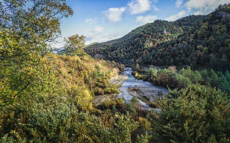 Imagen del bosque en Ansó, rodeando el cauce del río.