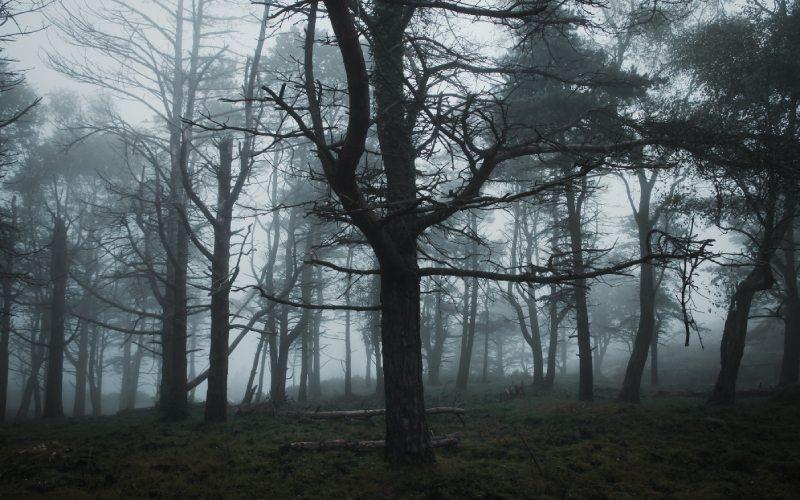 Bosque asturiano con niebla
