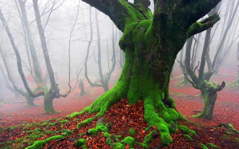 Bosque de Euskadi