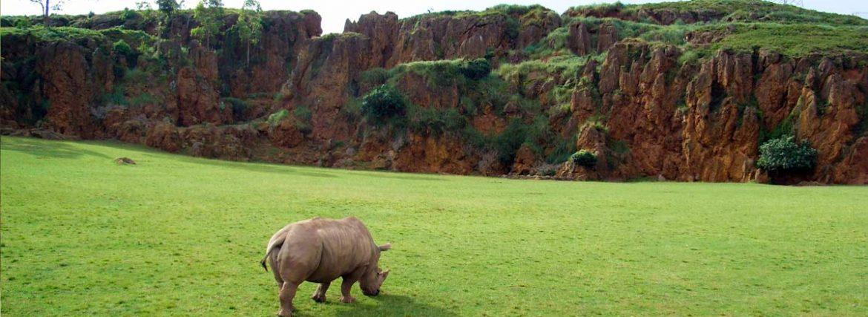 Parques naturales para ver animales en semilibertad