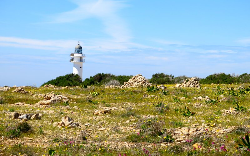 Vista del Cabo de Barbaria con el faro al fondo