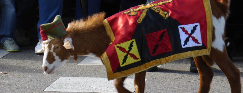 cabra de la Legión, mascotas militares más famosas