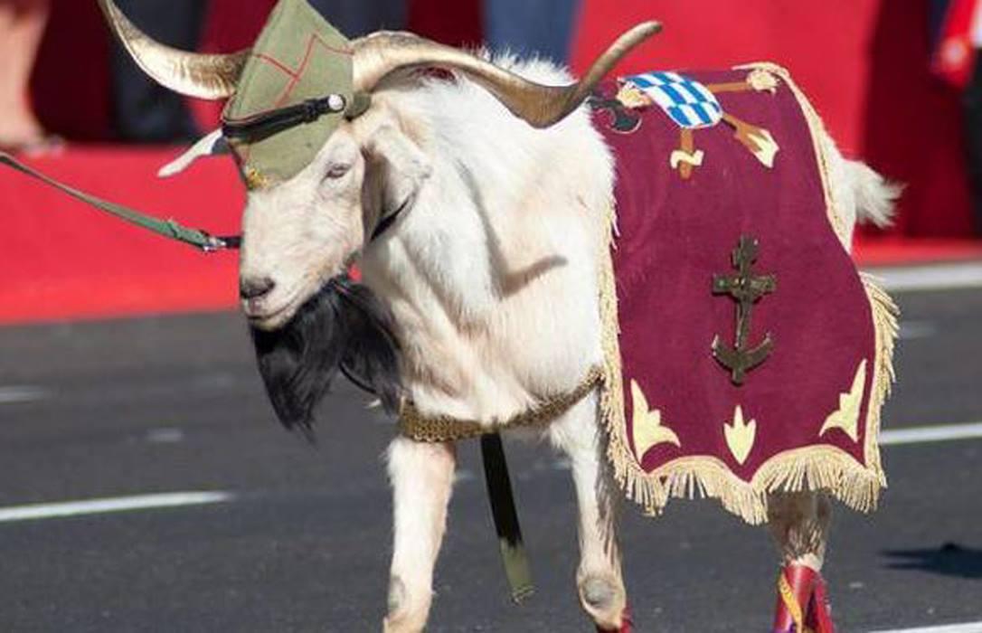 Pepe cabra de la Legión más famosa