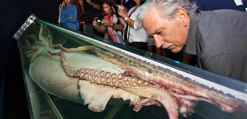 calamar-gigante-(14)