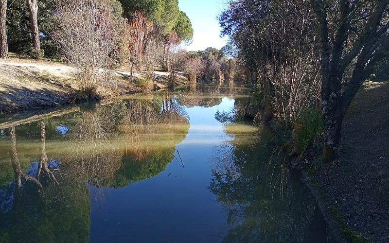 Canal del Guadarrama a su paso por la dehesa de Navalcarbón