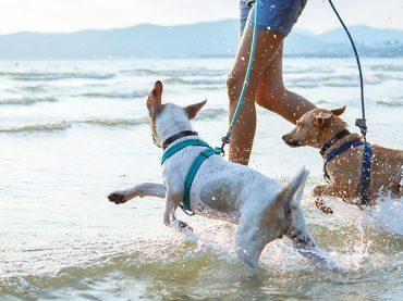 Planes con perro para este verano
