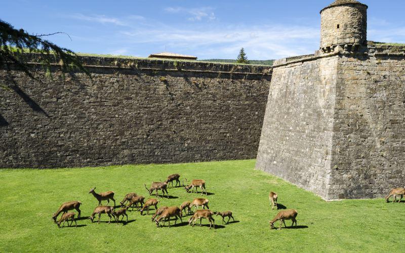 Ciervos en el foso de la ciudadela de Jaca
