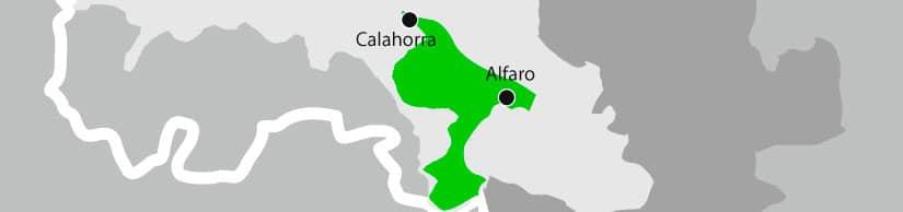 Coliflor de Calahorra