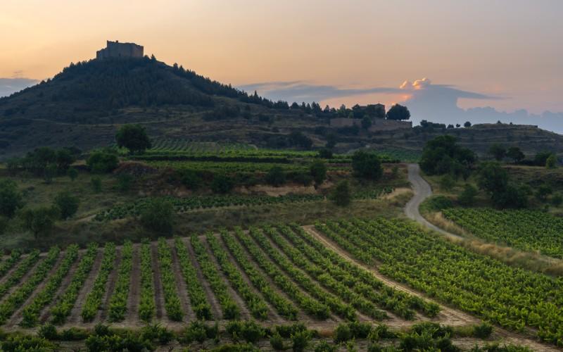 Vista de las viñas riojanas con el castillo de Davalillo al fondo
