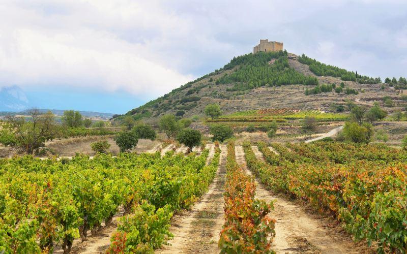 Castillo de Davalillo entre viñedos