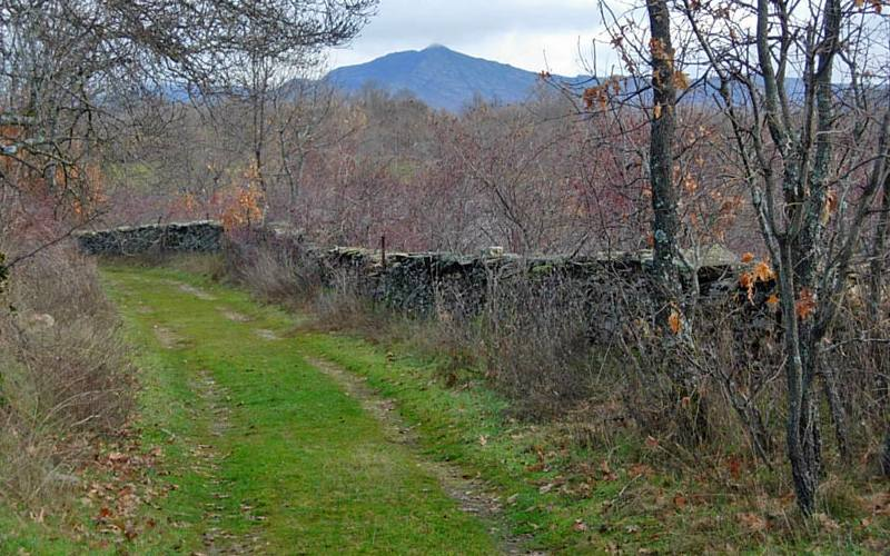 Dehesa boyal de Montejo de la Sierra