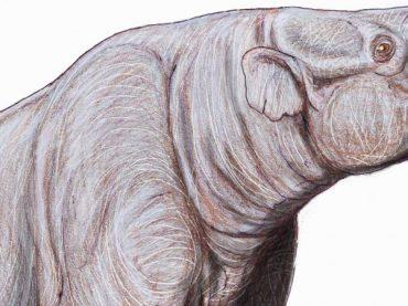 Hallan en Sabadell los vestigios más antiguos de Europa de dinoterio, un arcaico pariente de los elefantes