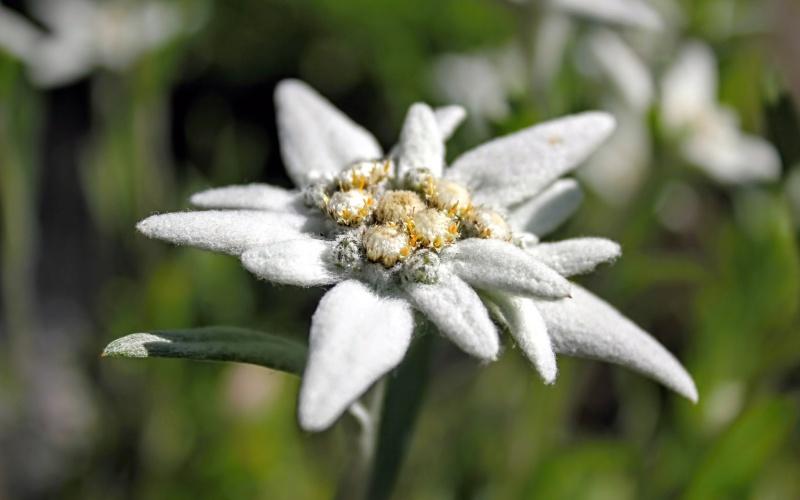 Una de las flores más bonitas y más difíciles de encontrar