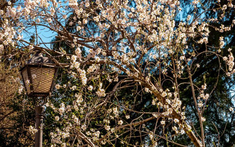 La primavera también ha llegado a este parque