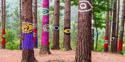 Qué ver en Bosque de Oma