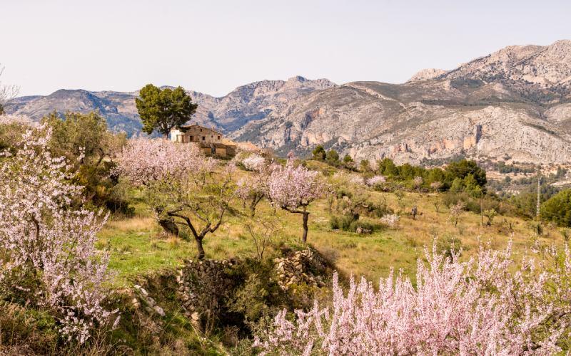 Valle de Guadalest y sus almendros