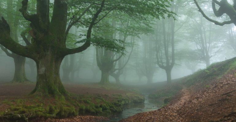 Los bosques del Basajaun