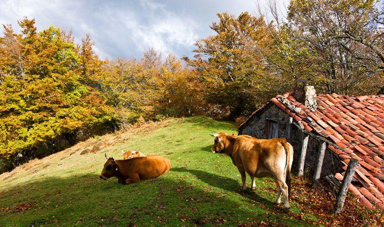 Hayedo de Orlé, hayedos de España para otoño