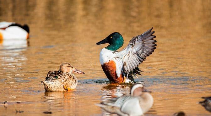 Lagunas de La Mancha donde observar aves