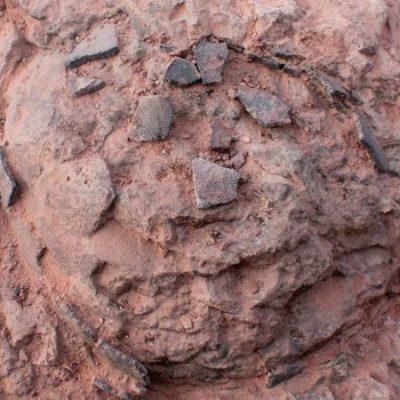 Hallan en Loarre un enorme depósito de huevos de dinosaurio con 68 millones de años