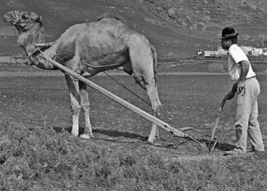 fotografia antigua canarias
