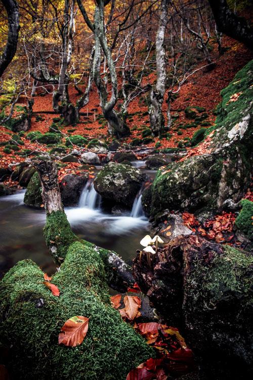 Bosque de hayas, Faedo de Ciñera